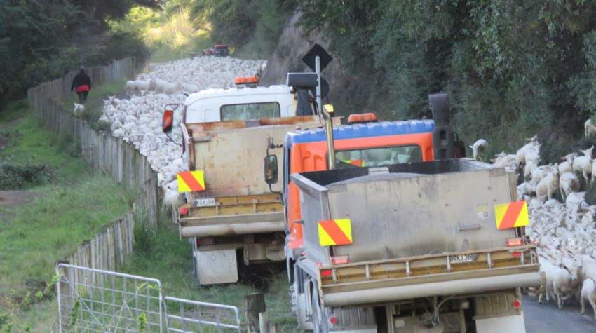 GISBORNE NOC ROAD MAINTENANCE